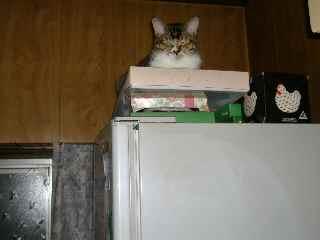 冷蔵庫の上で.jpg